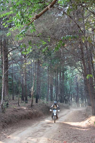 Sa-ngiam cruises through gorgeous pines on the way down from Doi Chang