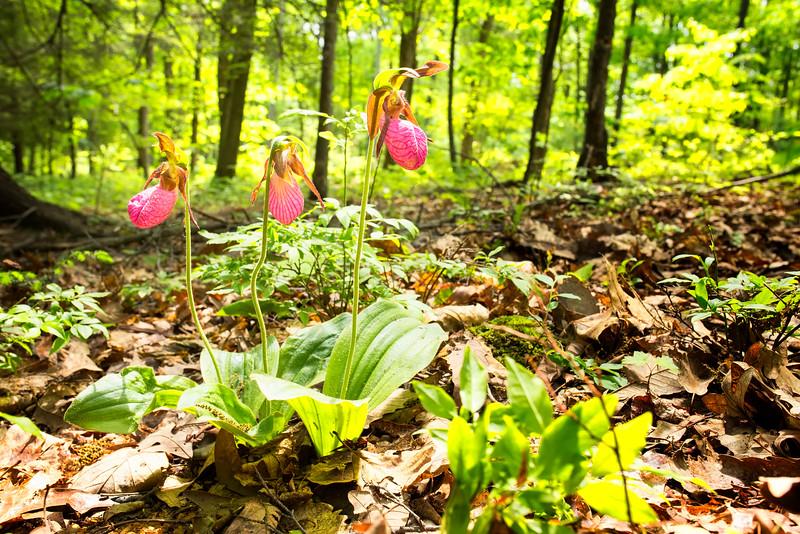 Spring Valley, 2015, Pennsylvania, North America