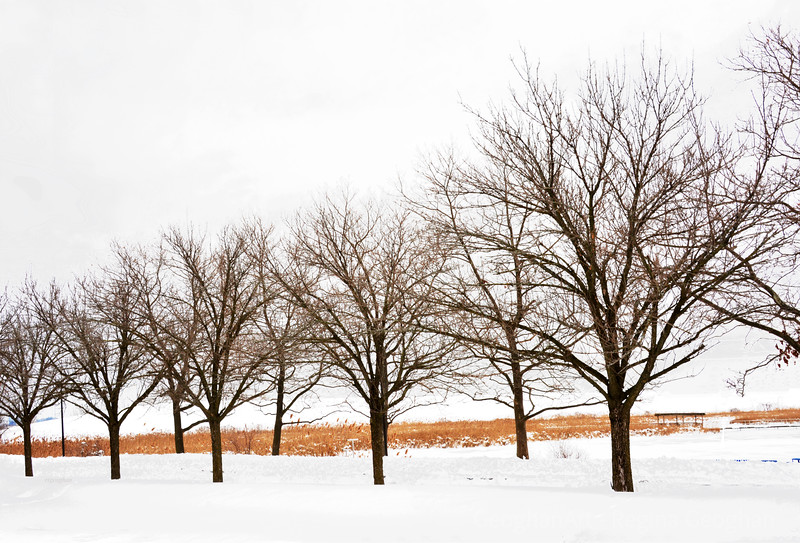 Winter Tree Lineup and Snow
