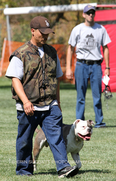Brevet: Handler, Yedid Miranda & Alapaha Bulldog, Chance. Judge: Kadi Thingvall & Decoy: Cary Petersen, NARA Level I Deputy Judge, Mark Muccillo, looks on in the background.  So Cal All Breed Ringers host a NARA French Ring trial at Lake Wohlford Canine Ranch in Valley Center, CA on September 4, 2011. Photography by Erin Suggett - All Rights Reserved 2011