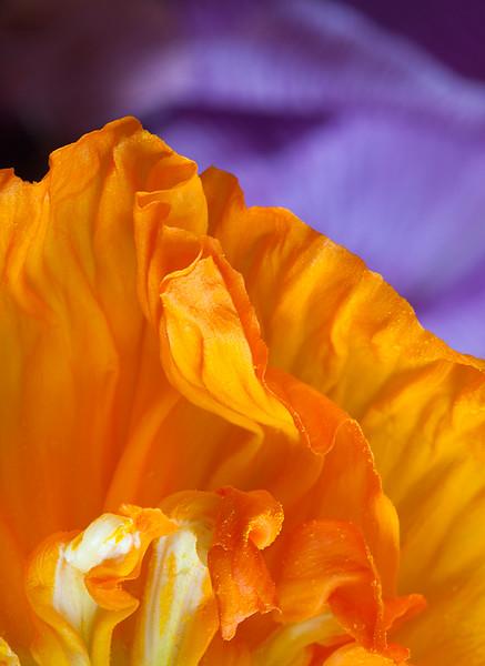 orange-petal-against-iris-background.jpg