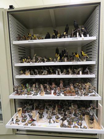 Muhlenberg College Ornithological Collection