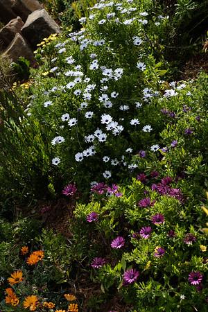 Blue Mountains Botanical Gardens