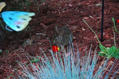 Front Garden Bunny