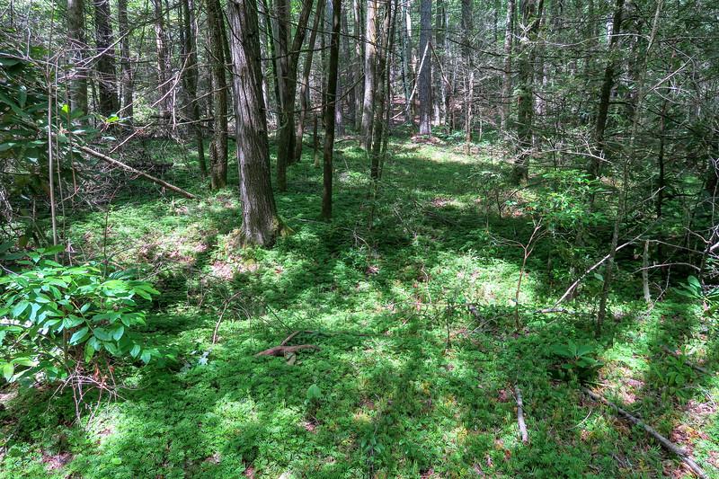 North Mills River Trail -- 2,270'