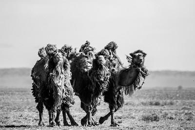 Mongolia 2019