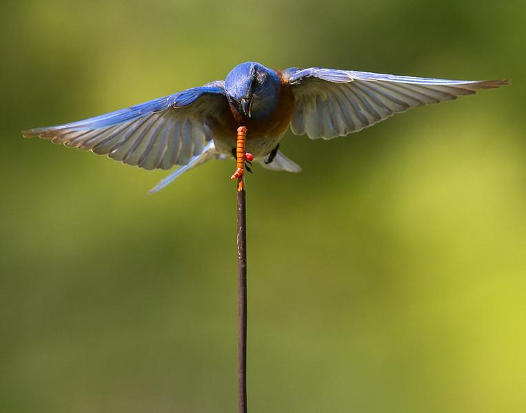 Robin-70.jpg