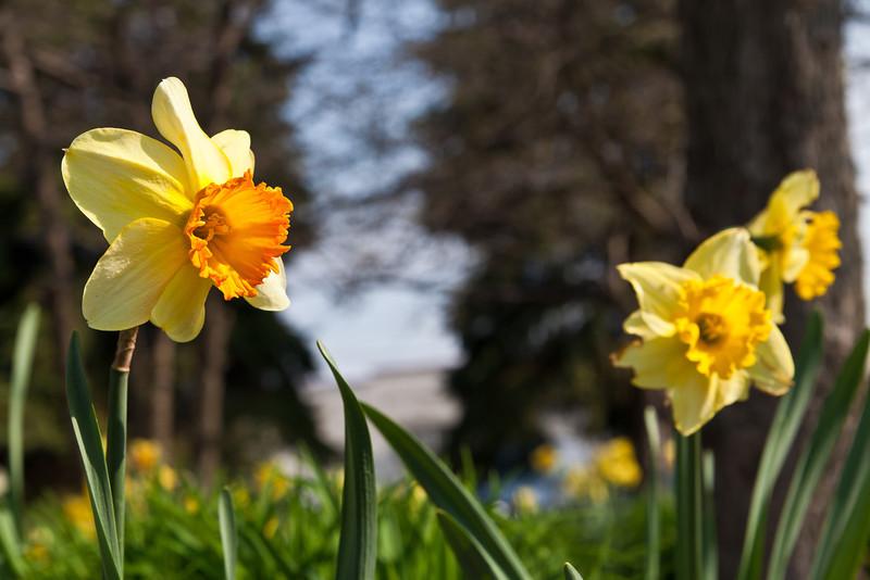 SpringFlowers-13.jpg