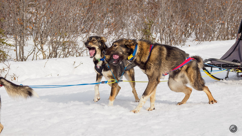 20190325_Blaire_and_Liz_Mushing_31.jpg