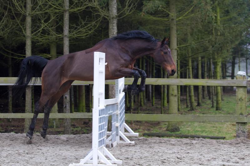 Paarden-366.jpg