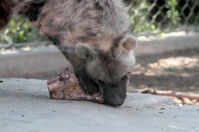 Denver Zoo - 2015