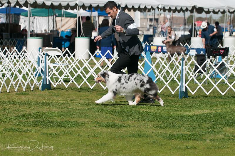 20170205_Australian Shepherds_Lost Dutchman Kennel Club-86.jpg