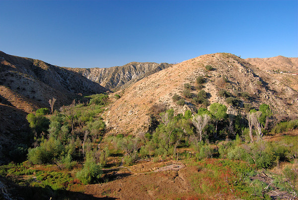 Big Morongo Canyon Preserve, CA, Birds 2008-2013