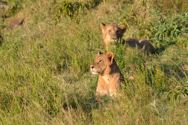 East Africa Safari 128.jpg