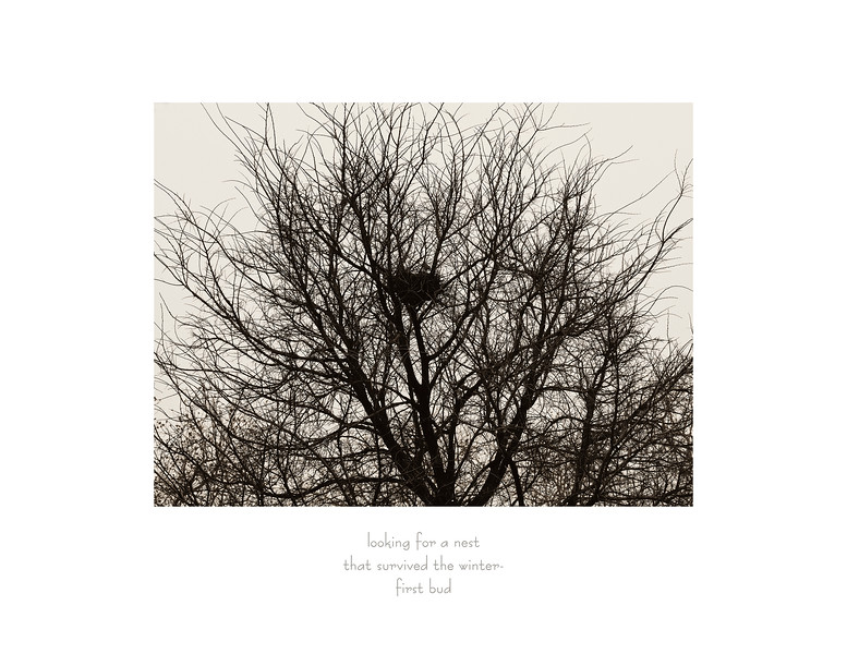 2015-03-08 Nest in Fred  poem 3080075.jpg
