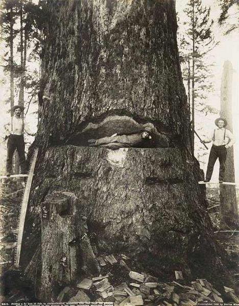 tree killers.jpg