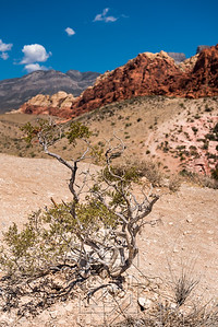 Desert tree or bush in foreground with red rock sandstone