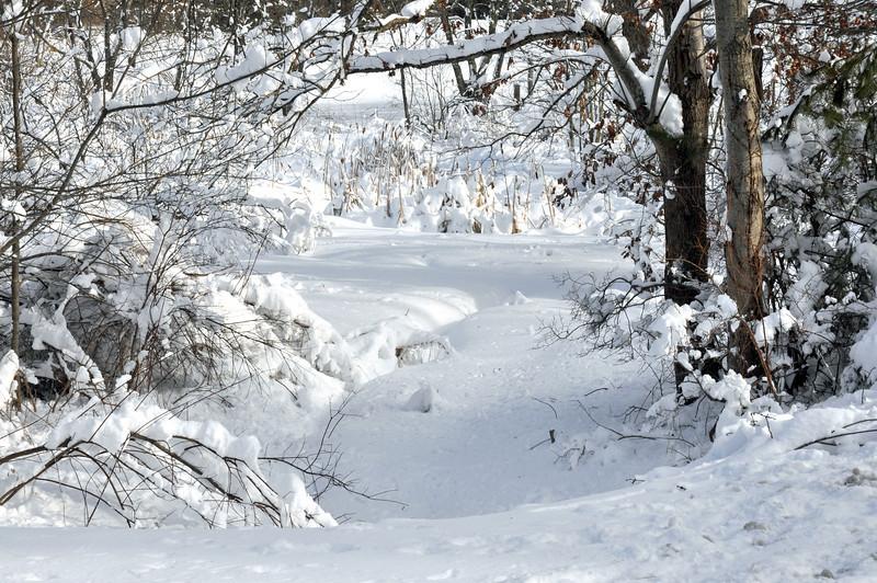 Snow around town 026.jpg