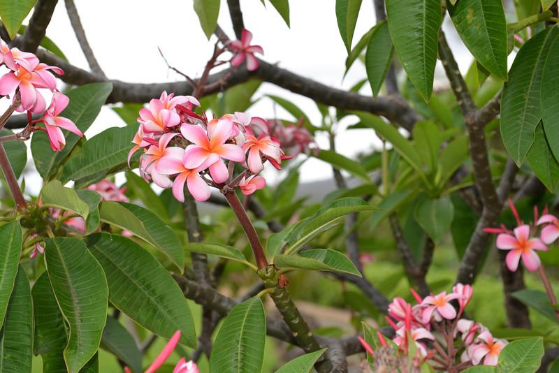 Maui - Hawaii - May 2013 - 3.jpg