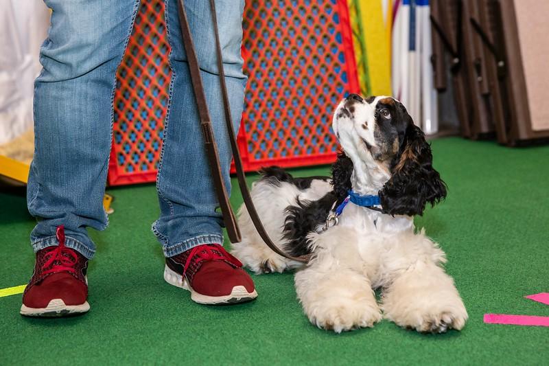 on Command dog Training June 2019-5155.jpg