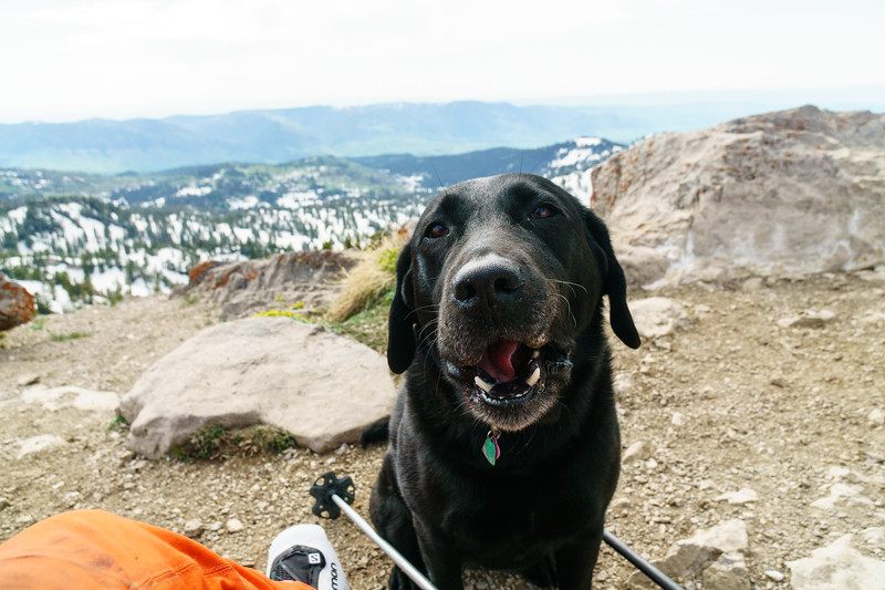 Jackie celebrates her 9th birthday with a June ski day on Naomi Peak near Logan, Utah.