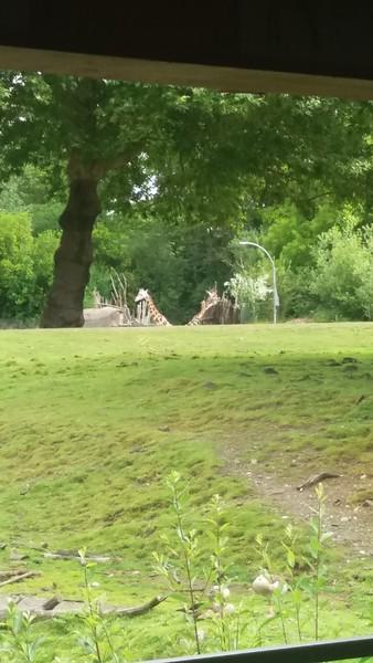 Woodland Park 2016