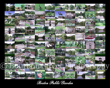 Boston Public Garden Collage