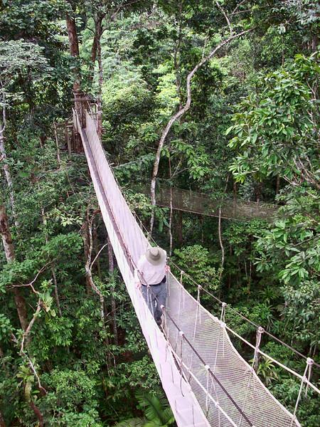Amazon Canopy Walk.jpg