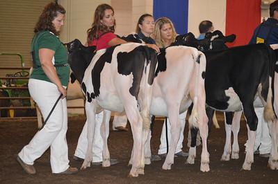 IL State Fair Holstein Show 2017