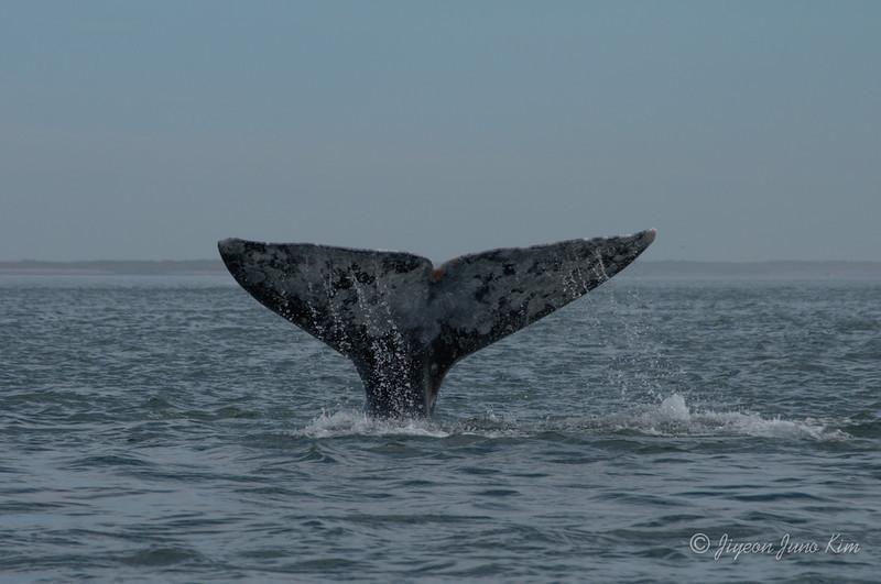 Mexico-Loreto-Whale-2357.jpg