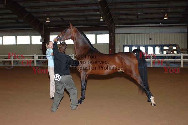CLASS 011 Stallions 3 Yrs & Over