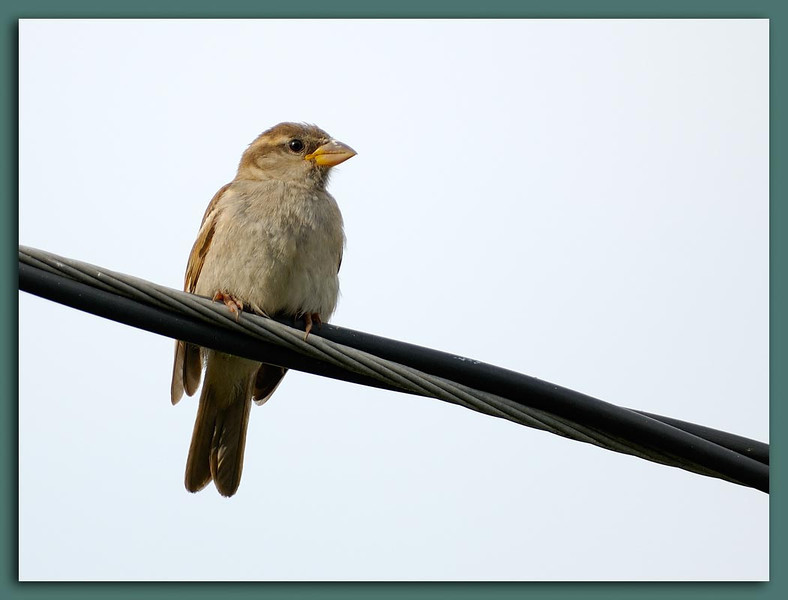 Bird on a Wire wTC-14E.jpg