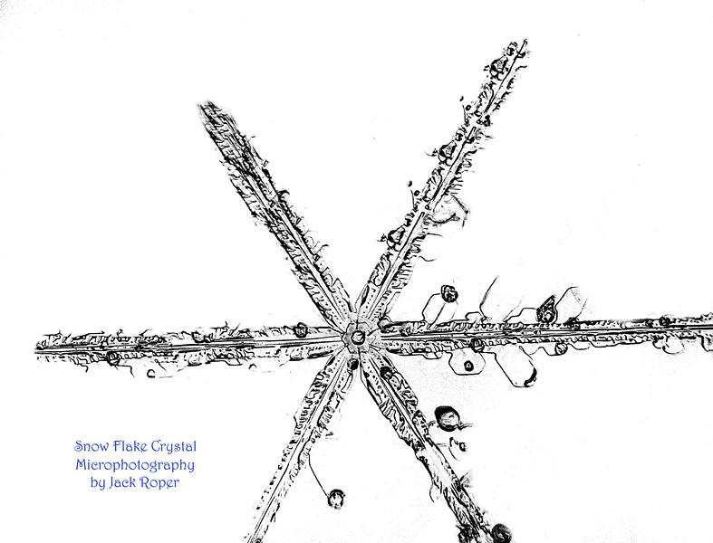 BEST SNOW STAR FLAKE white _ ..0546.jpg