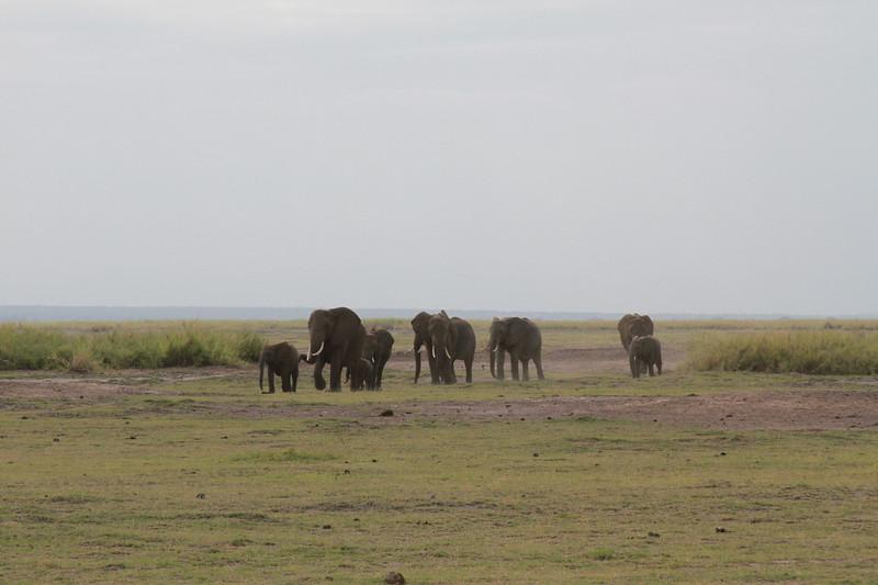 Kenya 2019 #2 731.JPG