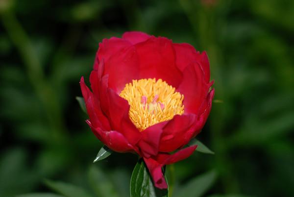 6/7/08 Jeannette's flowers