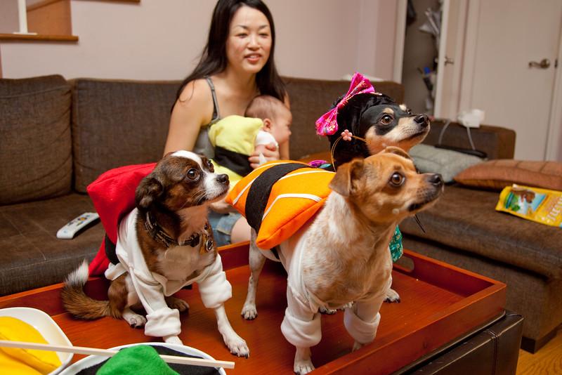 Dog-sushi-halloween-56.jpg