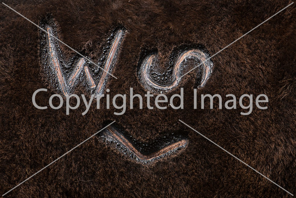Willow Springs Ranch Branding