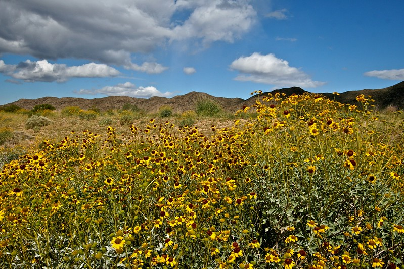 Pecos Road Wildflowers.jpg