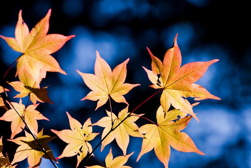 Autumn in Hokkaido 2009