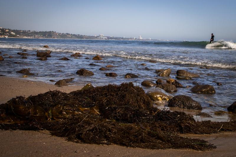 April 9 - Seaweed, surfer and Santa Monica.jpg