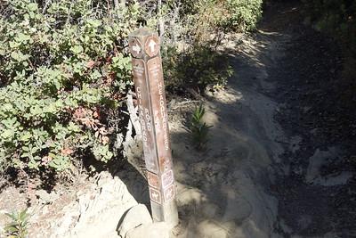 Basin Trail - Big Basin 10/9/2016
