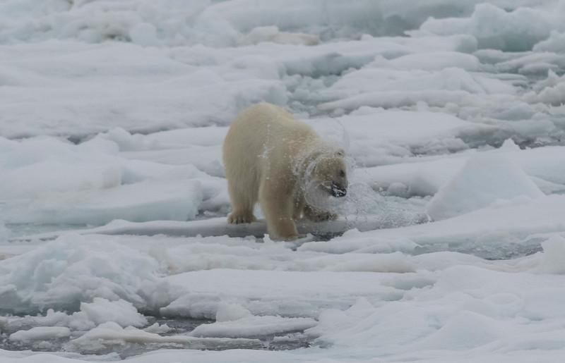Inspirato-Arctic_Expedition18-04-Russebukta-1128.jpg