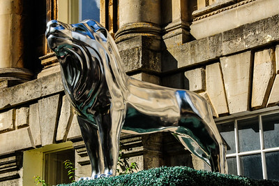 Lions in Bath