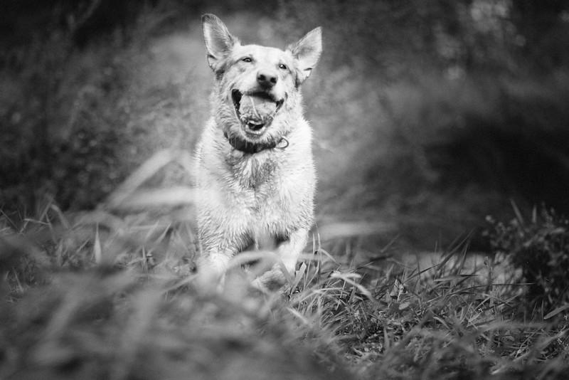 dogs for website-3.jpg