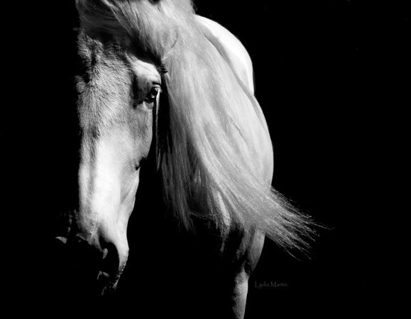 Horses in Black and White
