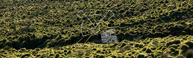 funny patterns in the grasslands of the central plateau at Pico Island