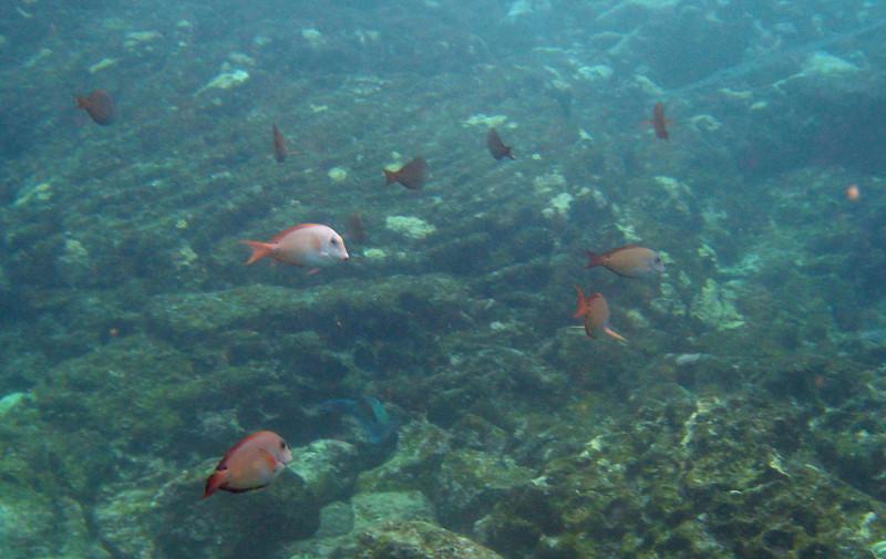 492- 20080416- Hawaii 20-Snorkelling IMG_0719.jpg