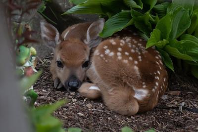 Deer, Foxes, Bears, Coyotes, and Elk