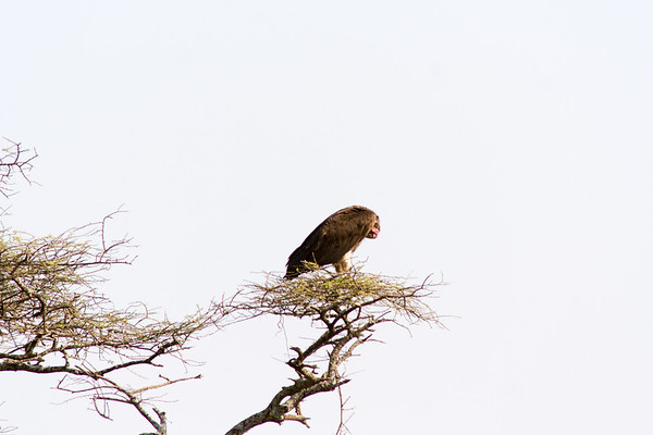 Tanzania - Aug 2005