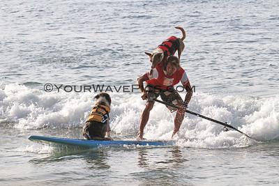 VetShopAustralia Surfing Dog Spectacular @ Noosa 3/6/16.